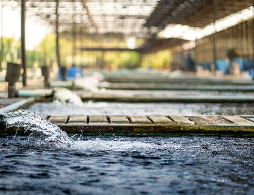 What ails Sewage Treatment Plants – Part 1 – The Pain Points